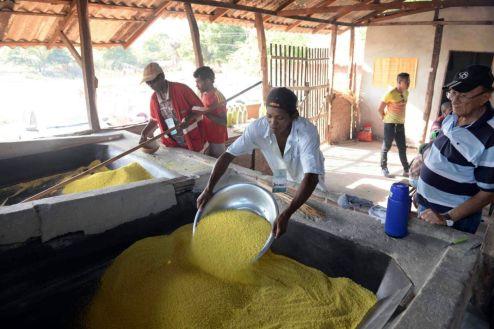 Produtores do Ramal do Quindiua já receberam capacitação do Sebrae e começaram a agregar valor à produção de farinha de mandioca e derivados.